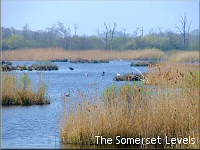The Somerset Levels